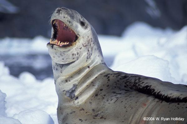 Antarctica Archives - Ryan's Journal